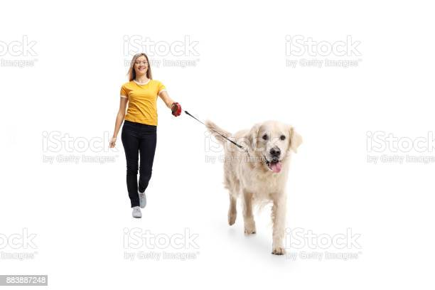 Young woman walking a dog picture id883887248?b=1&k=6&m=883887248&s=612x612&h=ukeecgmyw1j1facfxteehvsy8dodcbh7alwjvfvx59c=