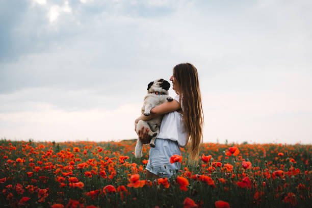 Young woman walking at poppy flower field with her dog during sunset picture id1165724614?b=1&k=6&m=1165724614&s=612x612&w=0&h= fartyiwwilggedybwhvg7hcr10ubw3 a8 2yp2d5uy=