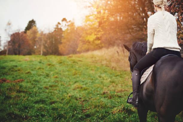 joven mujer caminando su caballo castaño a través de un pasto de otoño - equitación fotografías e imágenes de stock