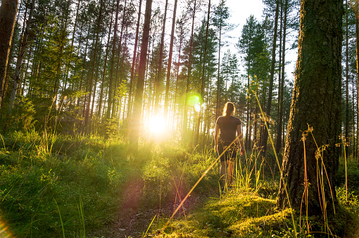 Young woman walking in forest path at sunset. Summer night in nature at dawn. Carefree lifestyle. Sun shining. Girl hiking in the woods.