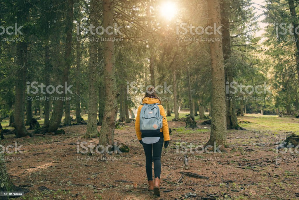 Young woman walking in the coniferous forest. stock photo