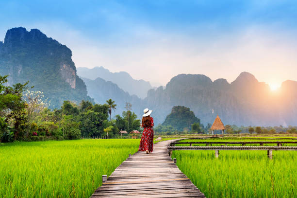 jonge vrouw lopen op houten pad met groene rijst veld in vang vieng, laos. - zuidoost stockfoto's en -beelden