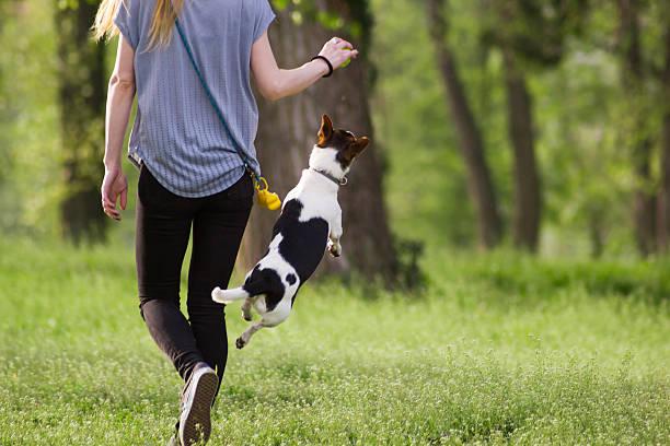 Young woman walking with dog playing training in the park picture id519793862?b=1&k=6&m=519793862&s=612x612&w=0&h=secdeqihk2rq 8nwvcjkz2dojyehcw3qrsjv0jbhbke=