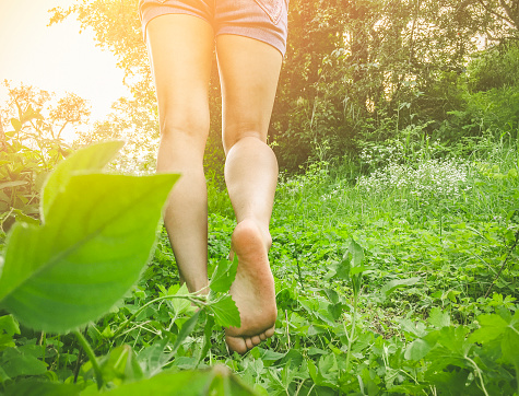 Close-up of young woman's legs. She walks barefoot on grass in meadow at morning in lush green nature.