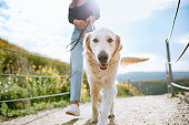 istock Young Woman Walks Her Dog In California Park 1216277209