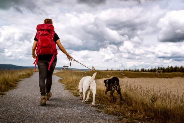 junge Frau geht mit zwei Hunden auf einem Wanderweg in den Bergen Wandern mit einem dramatischen Wolkenhimmel - Labrador Retriever und deutscher Schäferhund – Foto