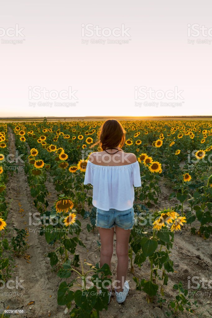young woman watching the sunset in a field of yellow sunflowers stock photo