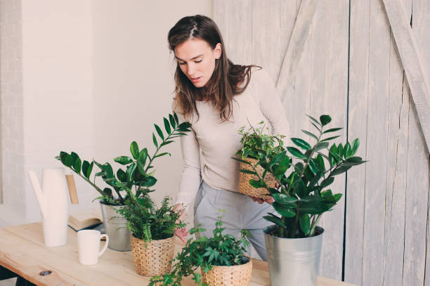 young woman watering flowerpots at home. Casual lifestyle series in modern scandinavian interior stock photo