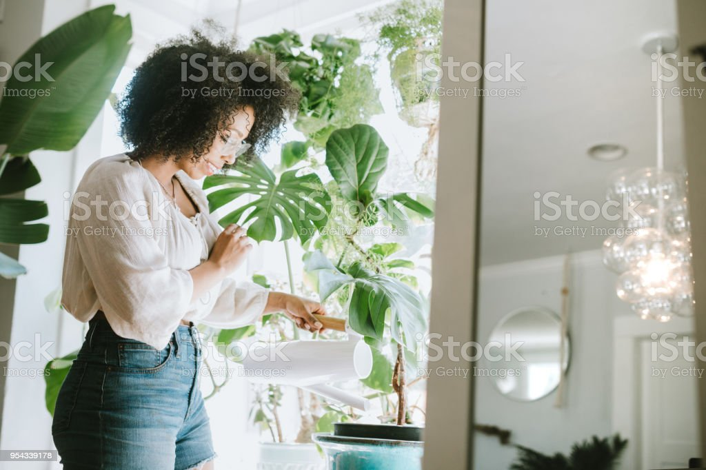 A Young Woman Waters Her Houseplants stock photo