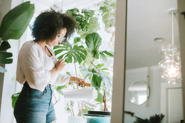 A Young Woman Waters Her Houseplants A happy young adult woman enjoys time at her home, the house interior well designed and decorated with an assortment of interesting plants.  She waters one of her plant arrangements with watering can. houseplant stock pictures, royalty-free photos & images