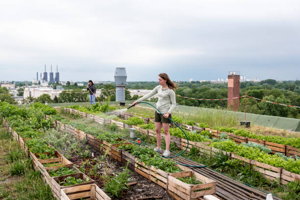 Young woman waters plants in an urban garden in front of a power station Young woman, waters herbs and plants on a urban roof garden community garden stock pictures, royalty-free photos & images