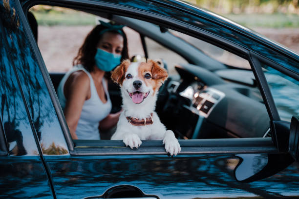 young woman wearing protective mask in a car. cute jack russell dog besides. Selective Focus on dog. Travel and new normal concept stock photo