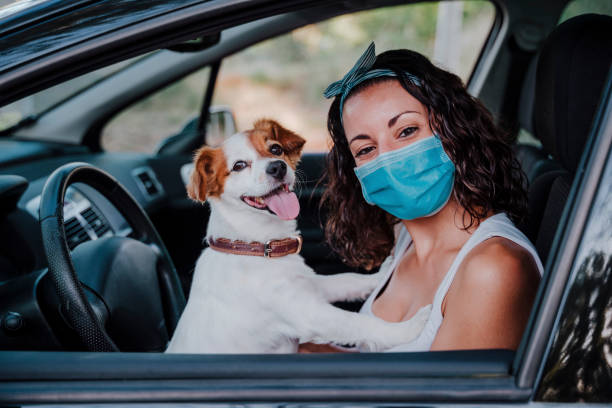 young woman wearing protective mask in a car. cute jack russell dog besides. Travel and new normal concept stock photo