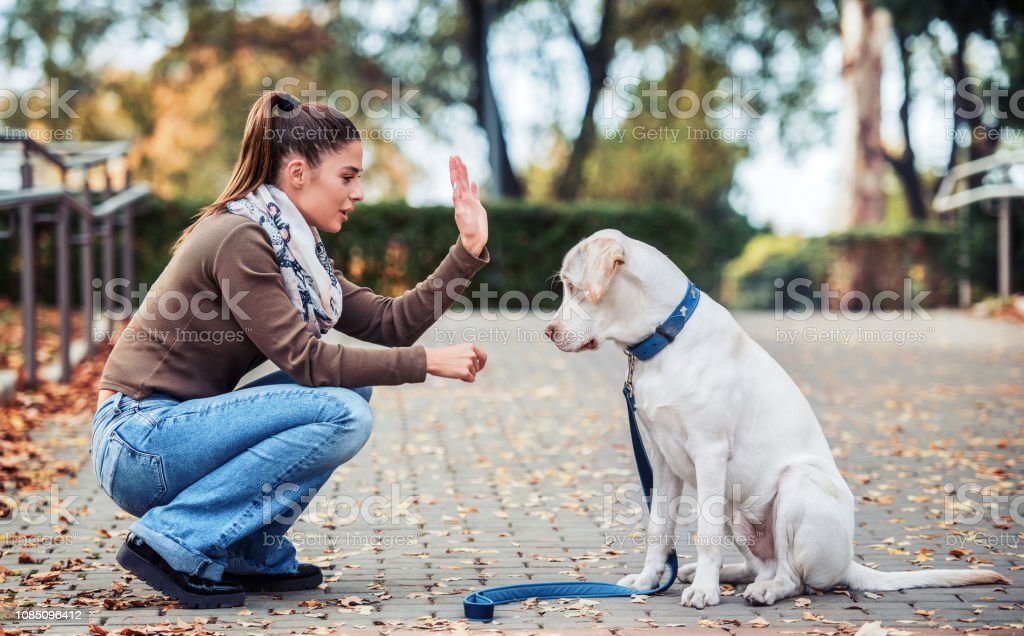 Young woman with a dog in the park. Pets and animals concept stock photo
