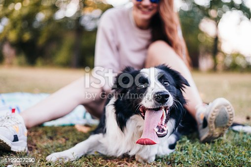 Young woman playing with a dog in the park