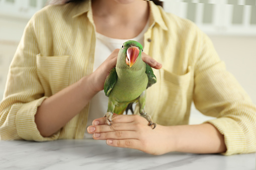 Young woman with Alexandrine parakeet indoors, closeup. Cute pet