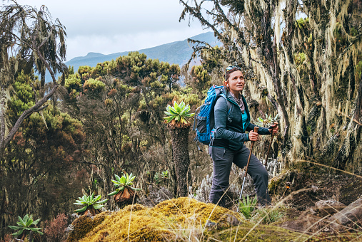 Young woman with backpack and trekking poles having a hiking walk on the Umbwe route in the forest to Kilimanjaro mountain. Active climbing people and traveling concept.