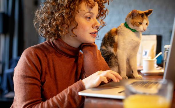 Young woman with cat using laptop picture id1196213271?b=1&k=6&m=1196213271&s=612x612&w=0&h=omda22dmutbqojko7j 7z2dofi2lz49qmgea2uwqtym=