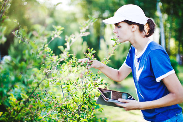 Young woman with digital tablet working in orchard stock photo