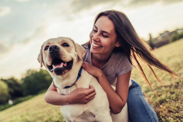 Young woman with dog Attractive young woman with labrador outdoors. Woman on a green grass with dog labrador retriever. retriever stock pictures, royalty-free photos & images