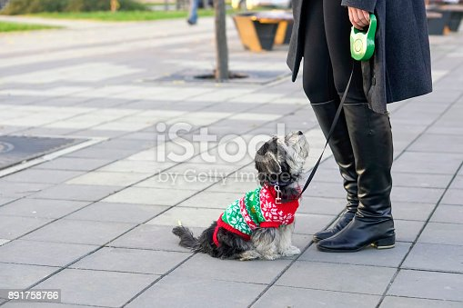 istock Young woman with puppy outdoors 891758766