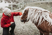 A woman in a red jacket strokes a Shetland pony on Yell, one of the Shetland Islands.