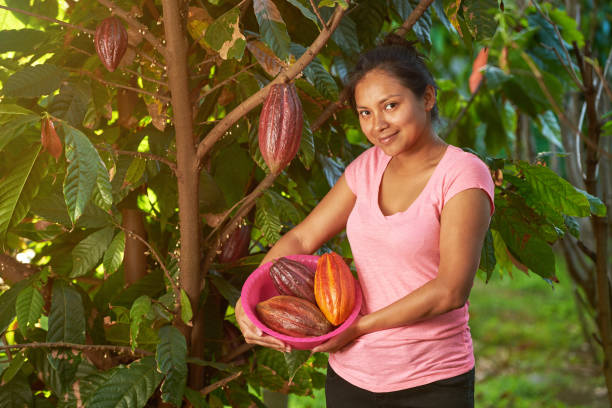 Young woman with tray full of cacao beans Young woman with tray full of cacao beans on green tree sunny background theobroma stock pictures, royalty-free photos & images