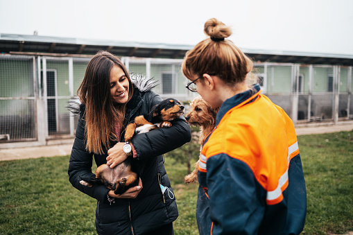 Young adult woman playing with dogs in animal shelter. She wants to adopt one dog and female worker heps her to decide.