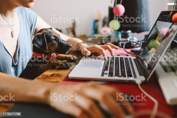 Young woman working at home with her pet puppy picture id1175471795?b=1&k=6&m=1175471795&s=612x612&h=79bfber6cyf1wicxp5ujs5x1qgoaoqo37uno8owq3g4=