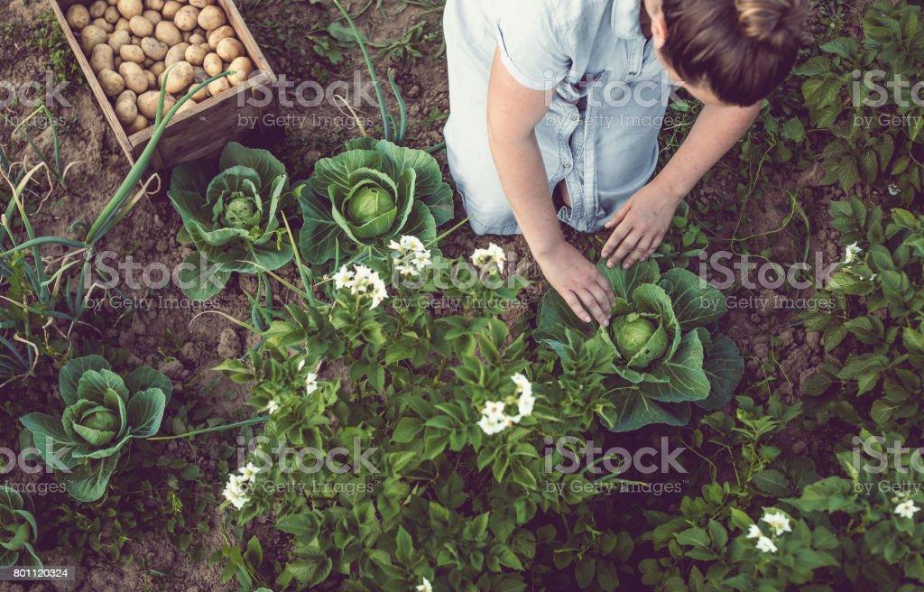 Joven trabajando en un huerto adulto hogar - foto de stock