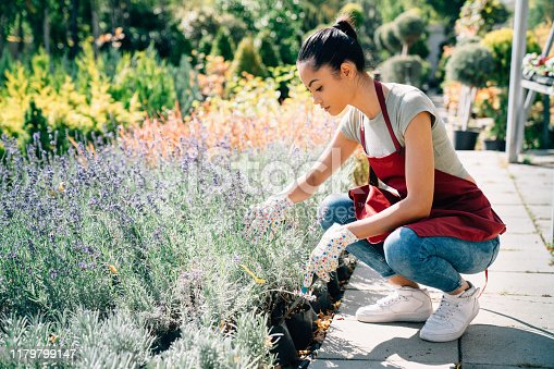 Mixed race housewife taking care of plants and herbs at summer day. Small family business concept