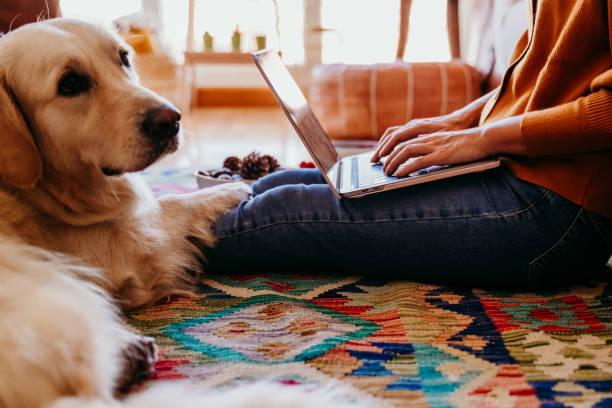 joven que trabaja en la computadora portátil en casa. lindo perro golden retriever además. tiempo de desayuno saludable. tecnología y estilo de vida en interiores - foto de stock