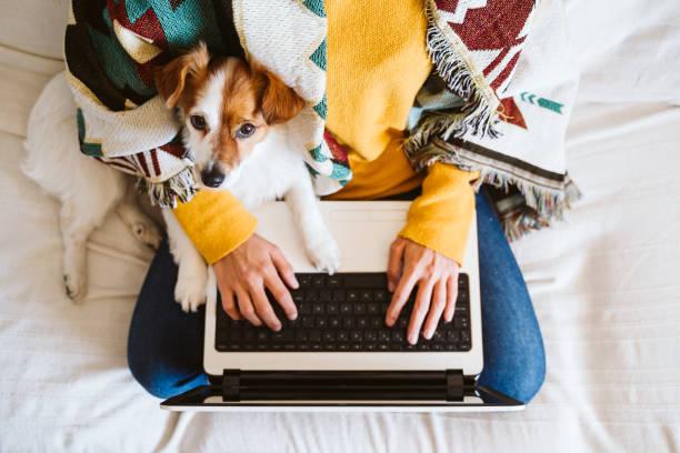 joven que trabaja en la computadora portátil en casa, sentado en el sofá, usando una máscara protectora. Lindo perro pequeño además. Mantente como el concepto de casa durante el coronavirus cóvido-2019 - foto de stock