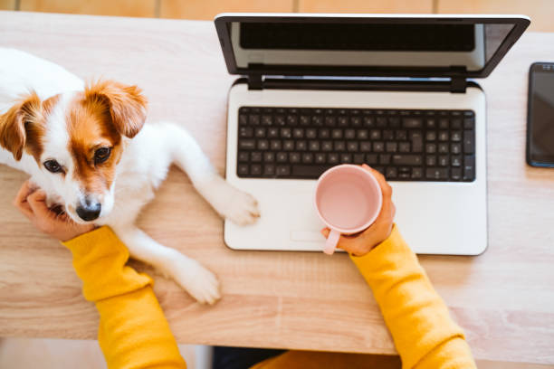 joven mujer que trabaja en la computadora portátil en casa, usando máscara protectora, perro pequeño lindo además. trabajar desde casa, mantenerse a salvo durante coronavirus cóvido-2019 concpt - foto de stock