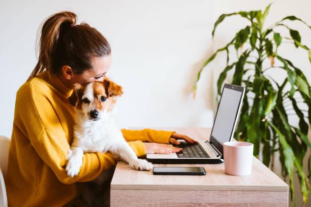 mujer joven que trabaja en el ordenador portátil en casa, perro pequeño lindo además. trabajar desde casa, mantenerse a salvo durante coronavirus cóvido-2019 concpt - foto de stock