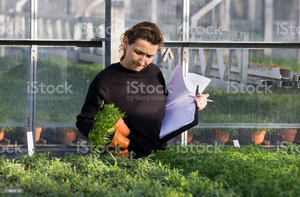 Young woman working with organic herbs in greenhouse. royalty-free stock photo