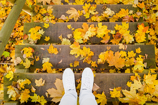 Young woman's legs in white shoes. Wooden stairs covered with fresh fallen, yellow and orange maple leaves. Golden autumn. Go down. Point of view shot.