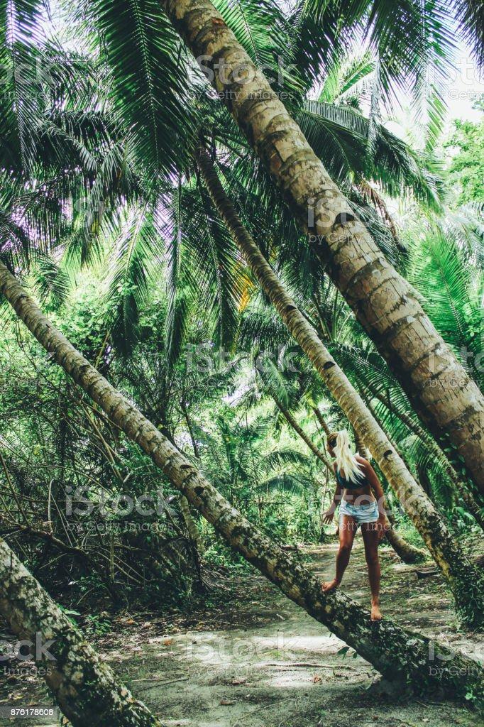 Young women climbing on palm tree stock photo
