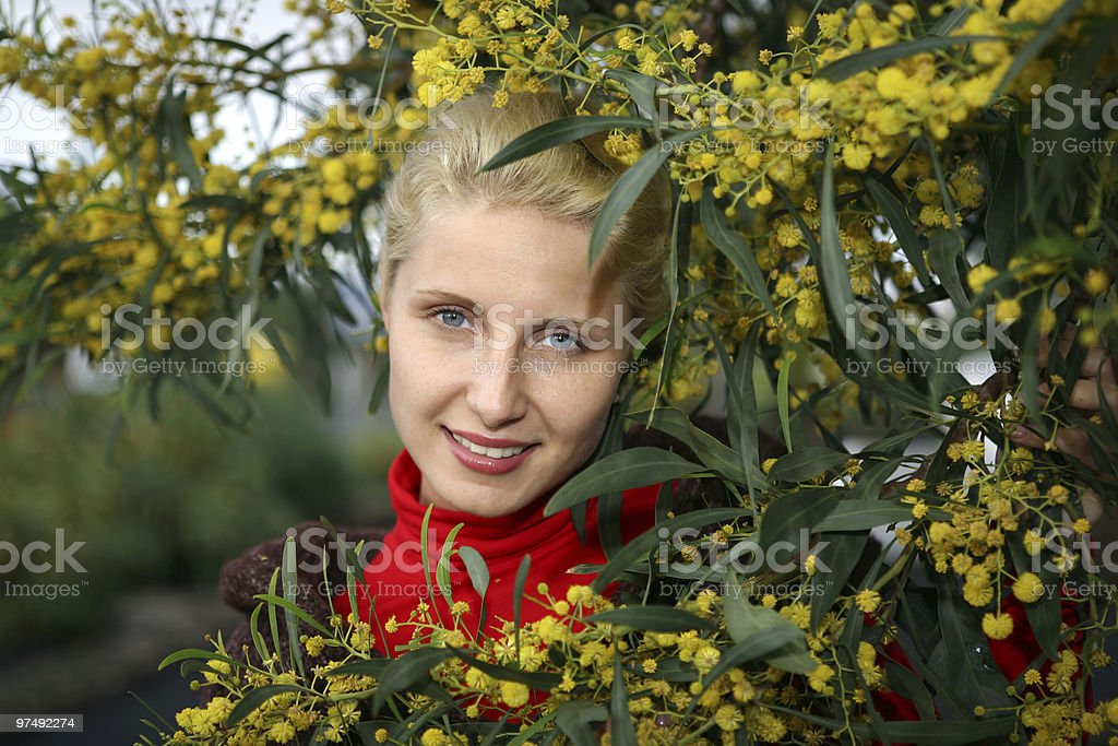 young women in bright yellow mimosa flowers royalty-free stock photo