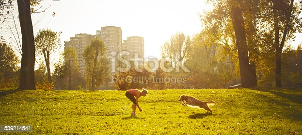 Golden retriever in the park playing with owner