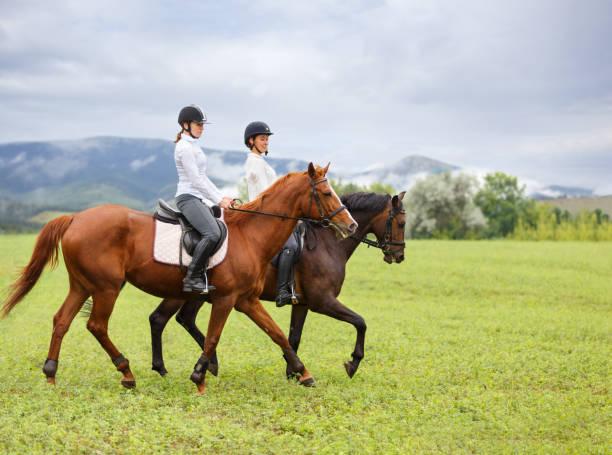 若い女性が馬に乗って山の牧草地 - 乗馬 ストックフォトと画像