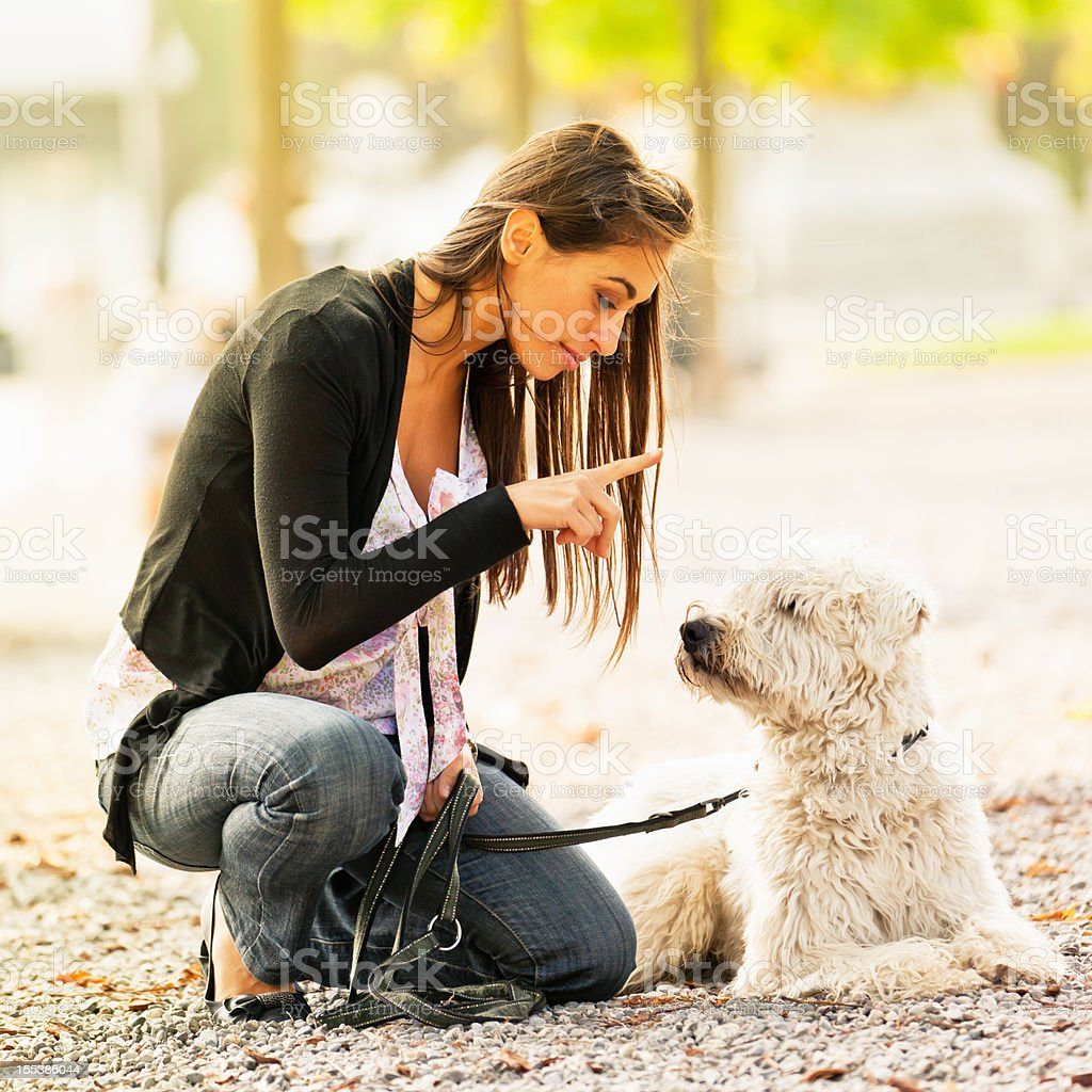 Young women teaching her dog stock photo