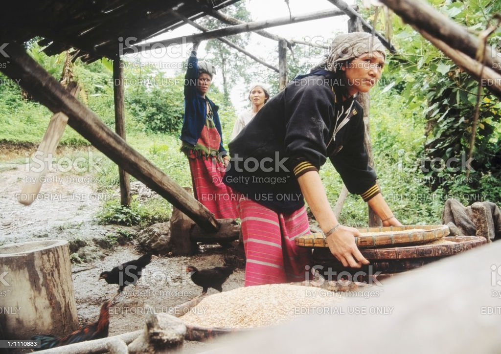 Young women threshing rice in jungle, Thailand stock photo