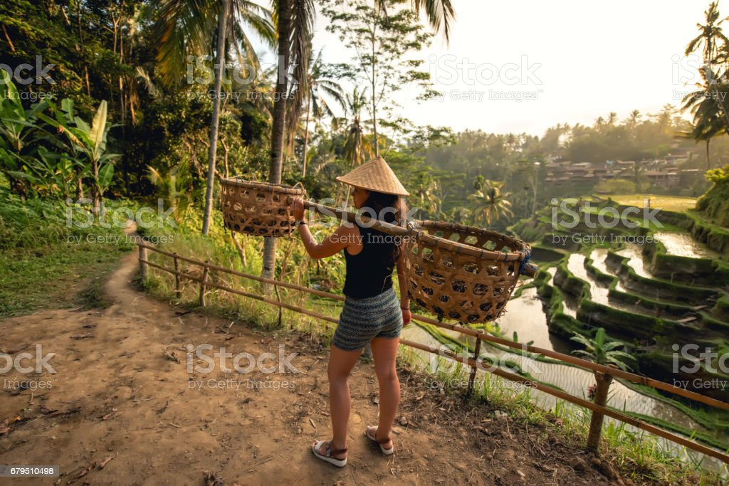 Young worker on rice field carrying around. Agricultural details on rice terraces stock photo