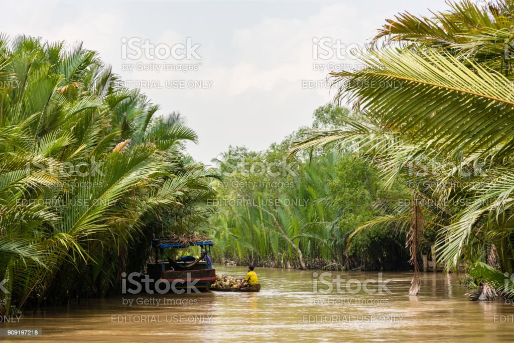Young worker transporting coconuts on a small boat on river stock photo