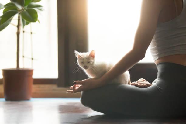 Young yogi woman meditating with cat pet, home interior backgrou stock photo
