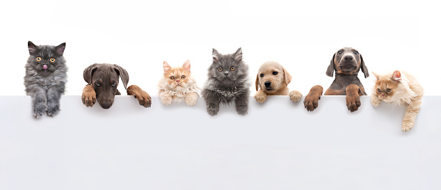 Dogs and cats above gray banner