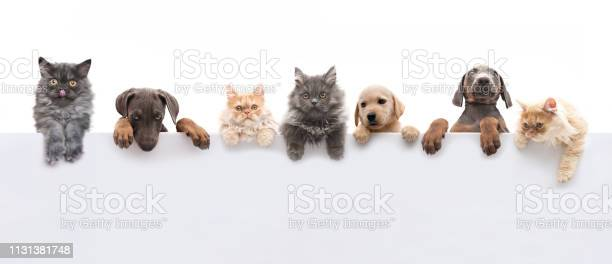 Youngogs and cats above grey banner picture id1131381748?b=1&k=6&m=1131381748&s=612x612&h=rv4dj8zxw1upbtkaeubw rhulz4khrhurkkecuq0nxe=