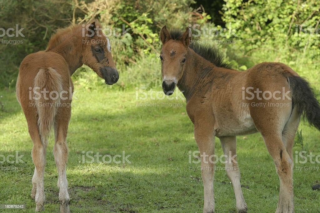 Youngsters royalty-free stock photo