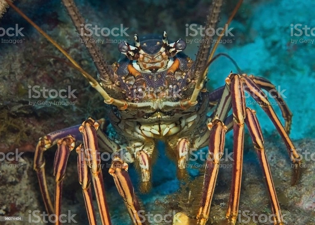 You're not going to eat me! royalty-free stock photo